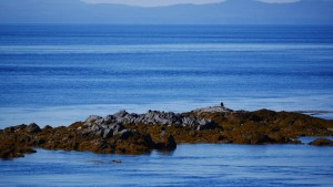 A crow and an eagle sit together on small island immediately adjacent to Five Finger Lighthouse.